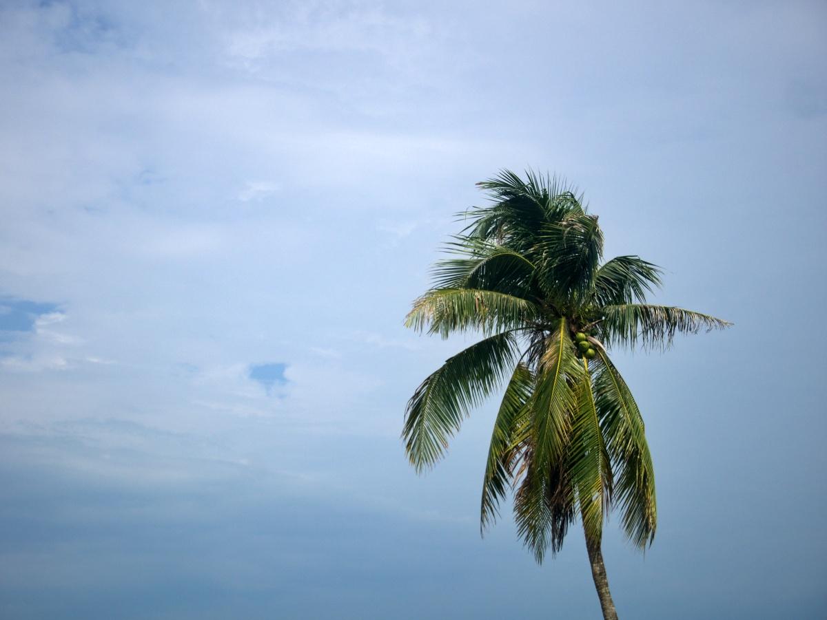 A morze palmy
