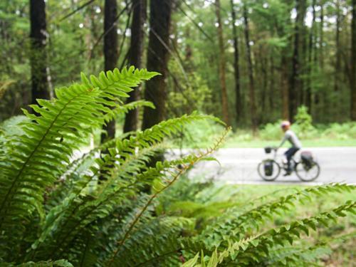 paprocie rowerzystka